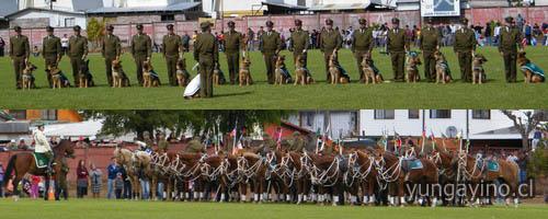 Orfeón Nacional, Cuadro Verde Y Perros Policiales Realizaron Presentación en Yungay