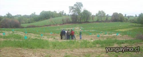 Curso de Transferencia Tecnológica para Agricultores de la Región del Bio Bio en Yungay