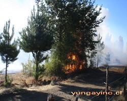 Incendio en Sector La Isla, Cabrero
