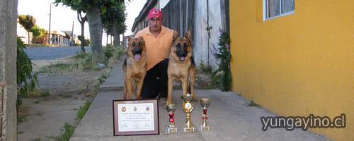 Destacada Participación de Yungayino y sus Dos Perros Ovejeros Alemanes