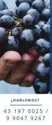 Agrícola El Boldo Requiere Trabajadores