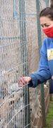 """Autoridades Visitaron Refugio """"Wenuwen"""" que Alberga Perritos de Yungay"""